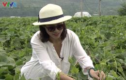 Diễn viên Quỳnh Hoa bật mí những tác dụng không ngờ của cây su su