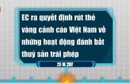 """Hồ sơ thủy sản Việt Nam bị EC phạt """"thẻ vàng"""""""