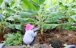 """Phụ nữ vùng cao Thừa Thiên Huế với phong trào """"Mỗi hố rác một cây xanh"""""""