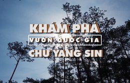 Bước chân khám phá: Khám phá vườn quốc gia Chư Yang Sin (20h55 thứ Sáu, 18/5 trên VTV8)