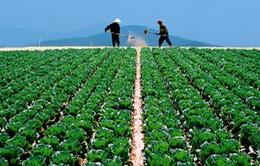 Nhập khẩu nông sản - liệu có bất thường?