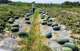 """Nghịch lý """"giải cứu"""" - nhập khẩu nông sản"""
