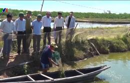 Đưa cán bộ nông nghiệp về cơ sở khắc phục sự cố môi trường