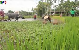 Phát triển du lịch sinh thái bền vững gắn với nông nghiệp, nông thôn