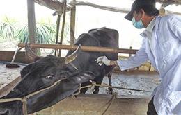 Nghệ An giám sát chặt chẽ dịch bệnh gia súc, gia cầm