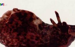 Cấy ghép ký ức trên ốc sên biển