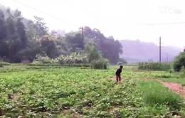 Lào Cai: Người dân bị thiệt hại do bùn thải của nhà máy hóa chất