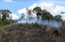 Đắk Lắk: Đề nghị kiểm tra vụ huỷ hoại rừng đặc dụng Nam Kar