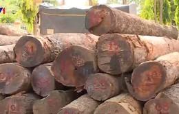 Đình chỉ cán bộ liên quan vụ vận chuyển gỗ tại Vườn quốc gia Yok Đôn