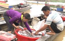 Công an vào cuộc điều tra nguyên nhân hàng trăm tấn cá bè chết trên sông La Ngà
