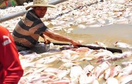 Cá chết hàng loạt tại Đồng Nai có thể do biến đổi bất lợi về môi trường