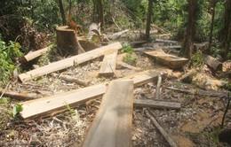 Những khoảng trống trong bảo vệ rừng