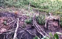 Bình Thuận: Công khai phá rừng phòng hộ để bán đất