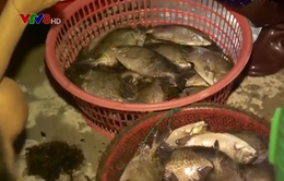 Chợ cá đêm bên đầm Thị Nại