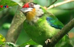 Quốc tế hỗ trợ Việt Nam bảo tồn đa dạng sinh học
