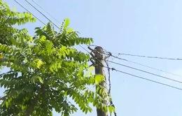 Khổ vì đường dây điện bủa vây đất nhà
