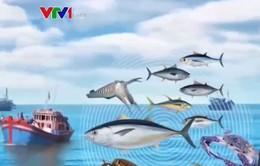 83 loài hải sản không còn xuất hiện ở vùng biển Việt Nam giai đoạn 2011 - 2015