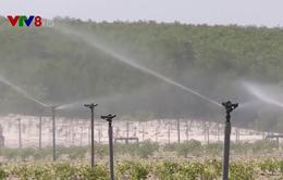 Quảng Trị: Phát triển nông nghiệp thích ứng với biến đổi khí hậu