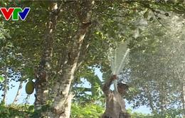 Khánh Hòa: Người dân Khánh Sơn chủ động phòng chống hạn trong mùa khô