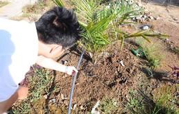 Quảng Ngãi: Nông dân áp dụng tưới tiết kiệm trên vùng hạn