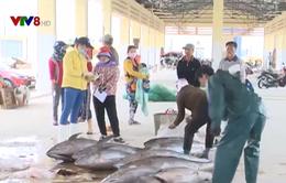 Bình Định tăng cường quản lý hoạt động khai thác hải sản