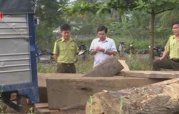 Các đối tượng khai thác, vận chuyển gỗ lậu rất manh động
