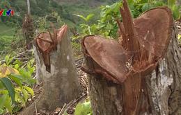 Vụ phá rừng ở Bắc Kạn: Bài học trong công tác quản lý, bảo vệ rừng