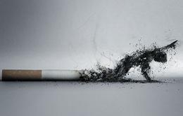 Thuốc lá và những tác hại khó lường