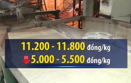 Tồn gần 700.000 tấn, giá đường tụt dốc