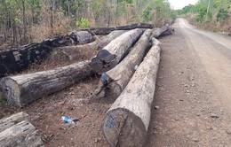 Vụ gỗ đè chết người tại Đắk Tô: Xác minh nguồn gốc số gỗ được vận chuyển
