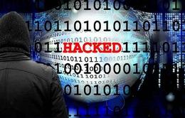 Cuộc chiến chống đánh cắp thông tin thẻ tín dụng tại Mỹ