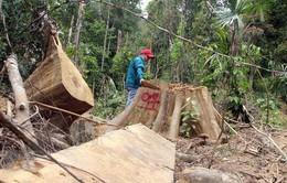"""Rừng Tây Nguyên vẫn liên tục bị tàn phá bất chấp lệnh """"đóng cửa rừng"""""""