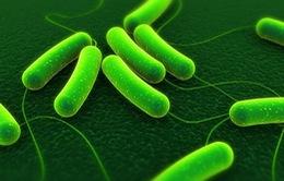 Mỹ: Đã có người tử vong trong đợt dịch bệnh do E.coli bùng phát