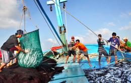 Khánh Hòa nỗ lực chống khai thác thủy sản bất hợp pháp