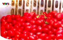 Bảo quản hoa quả bằng chế phẩm sinh học