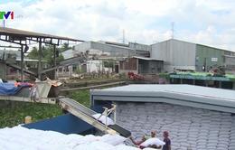 Việt Nam trúng thầu xuất khẩu gạo sang Philippines