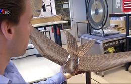 Robot đuổi chim bảo vệ các chuyến bay
