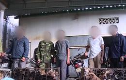 Hà Tĩnh: Triệt phá đường dây trộm chó liên tỉnh