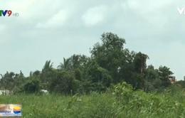 Đồng Tháp: Gần 2 ha đất được bồi hoàn chỉ 2 triệu đồng