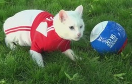 Kỳ lạ chú mèo khiếm thính tiên tri dự đoán kết quả World Cup ở Nga