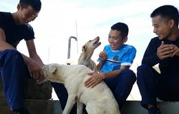 Những người bạn bốn chân trên đảo Trường Sa