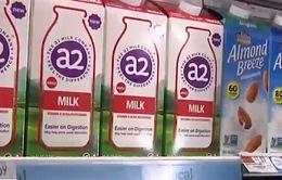 Mỹ: Sản xuất sữa dành riêng cho người khó tiêu