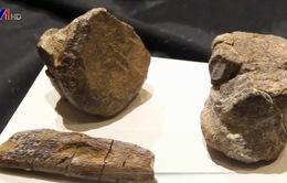 Phát hiện loài khủng long mới tại Mexico