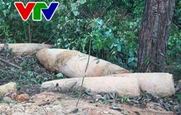 Quảng Trị: Phát hiện 4 quả bom còn sót lại sau chiến tranh