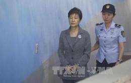 Cựu Tổng thống Park Geun-hye bị yêu cầu mức án 12 năm tù về tội nhận hối lộ từ NIS