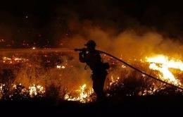 Mỹ: Sử dụng dê ngăn chặn cháy rừng