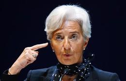 IMF cảnh báo Mỹ về chính sách bảo hộ thương mại