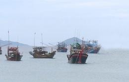 Quảng Nam: Vụ cá Nam được giá nhưng sản lượng sụt giảm