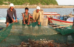 Khuyến cáo dịch bệnh khi nuôi tôm hùm mùa nắng nóng