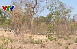 Tăng cường công tác bảo vệ rừng khu vực biên giới Tây Nguyên